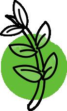 icono green de Síntesis y acción